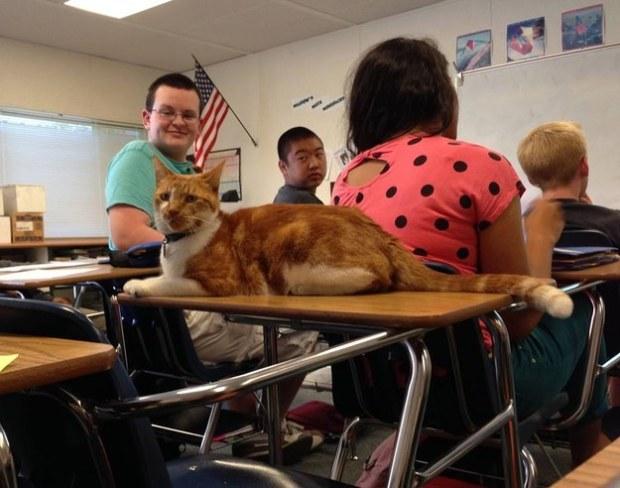 cat student