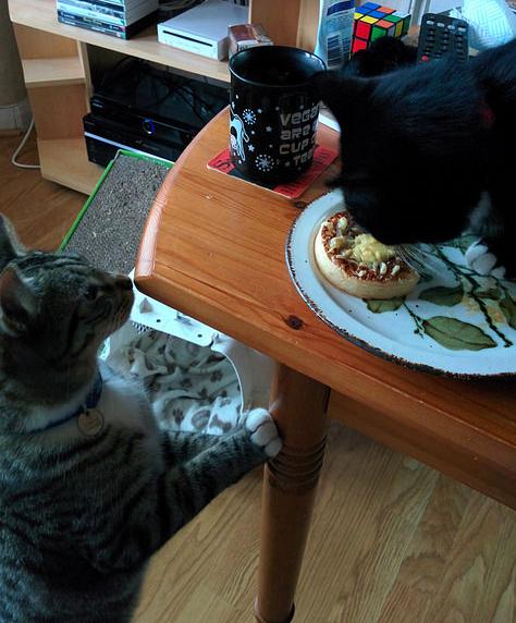 cat crumpets